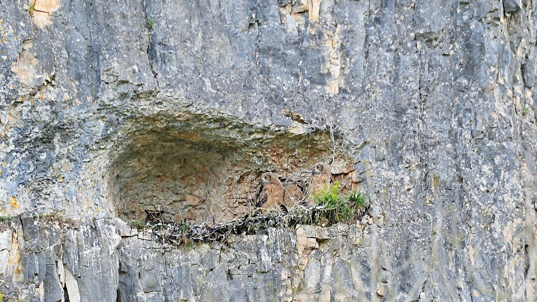 В пещере филинов
