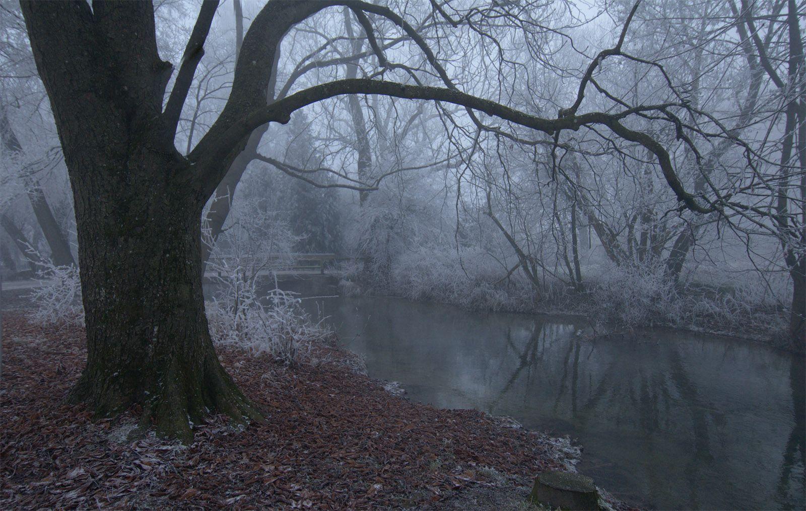 Морозным туманным утром на ручье утро туман дерево ручей