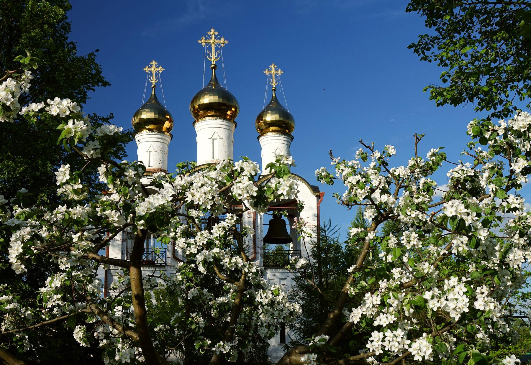 Весна в монастырском саду цветущие яблони монастырь