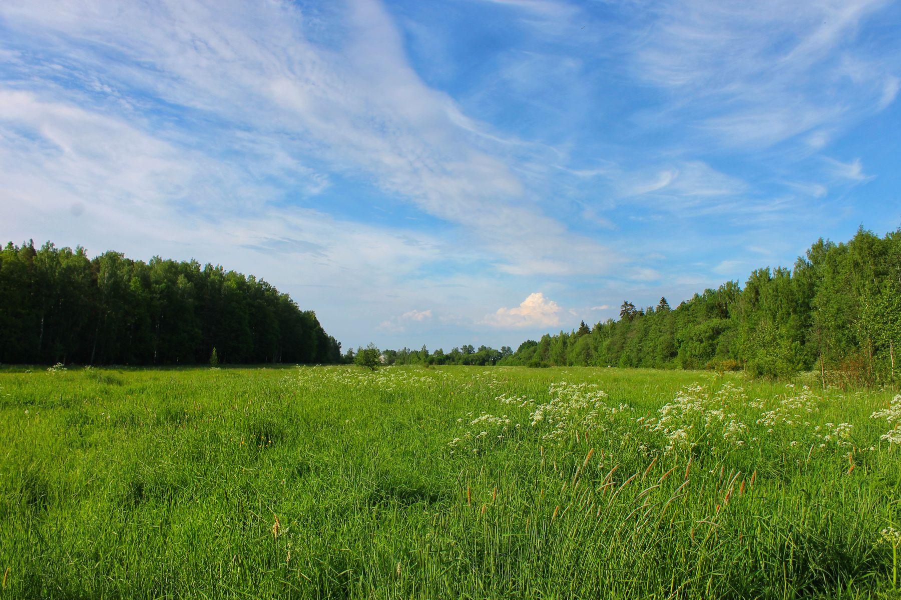 *** пейзаж природа лето