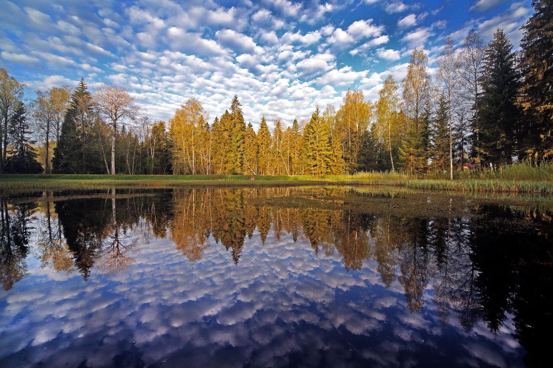 Центрально-Лесной Государственный Биосферный Заповедник