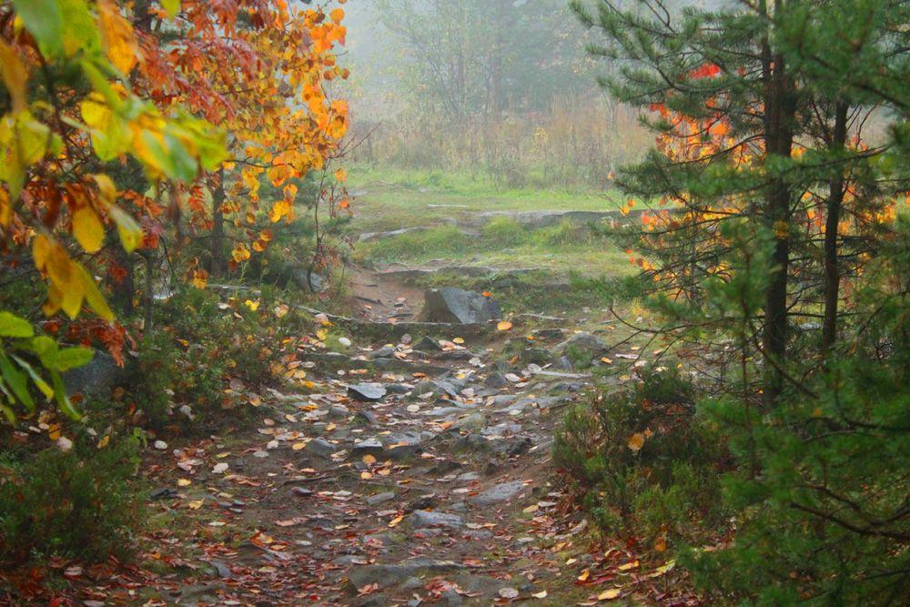Счастливая тропинка Осень туман лес тропинка