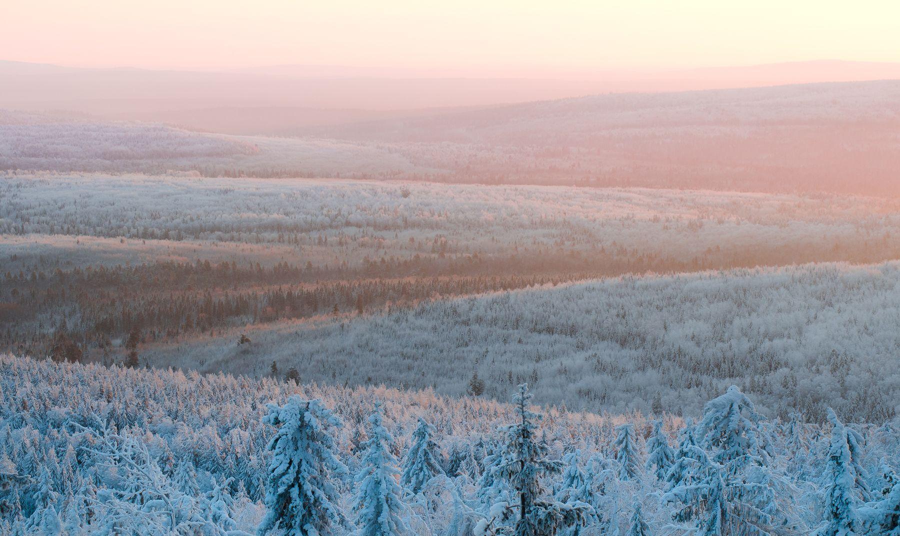 Зимние просторы рассвет пейзаж лес зима