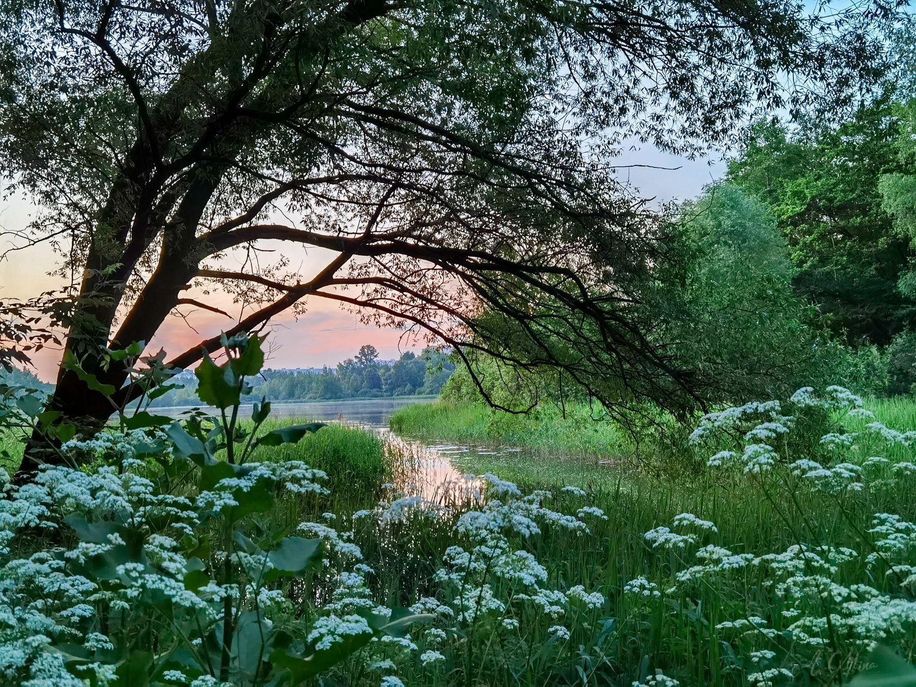 Июньский вечер Озеро трава цветы закат вечер