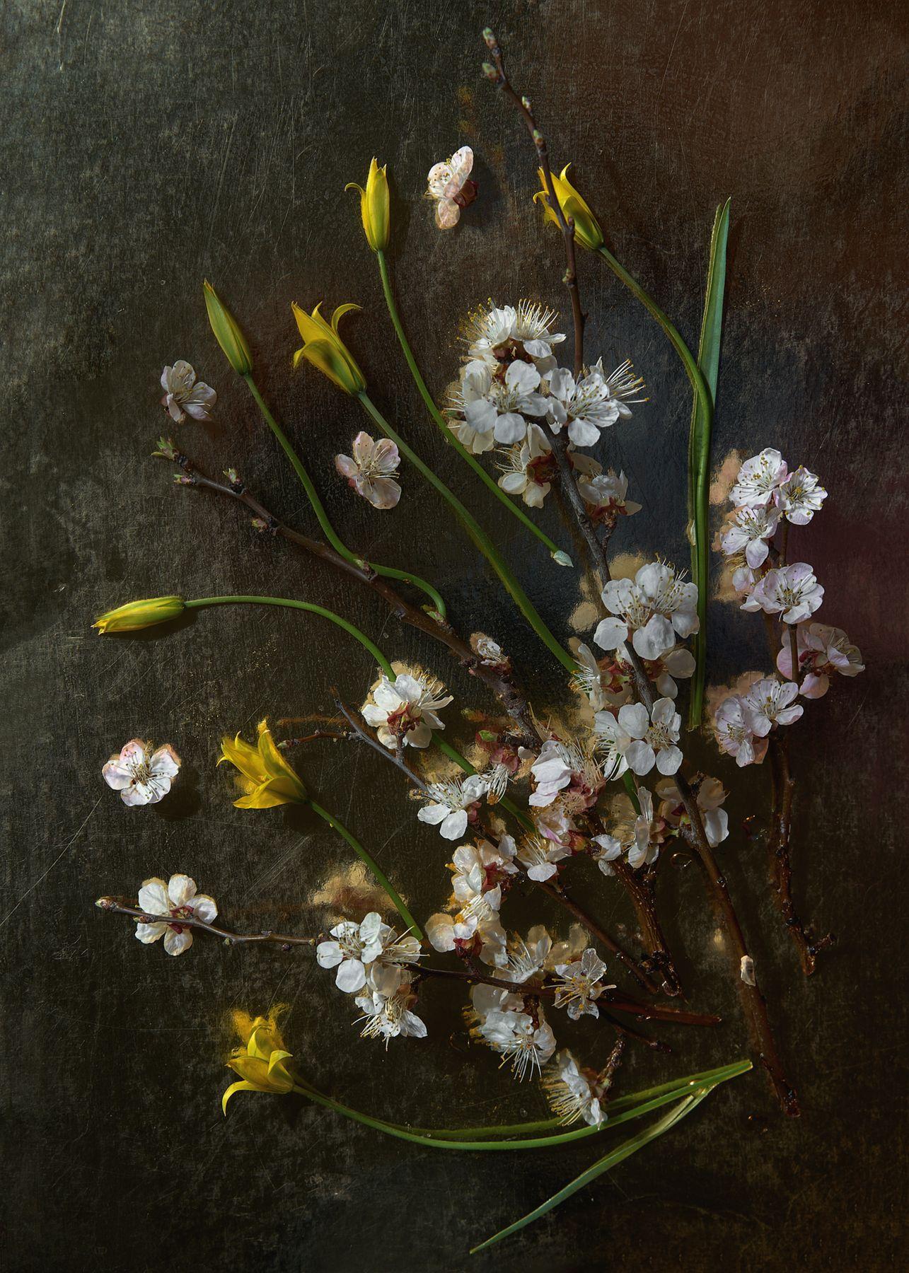 *** весна цветы птица
