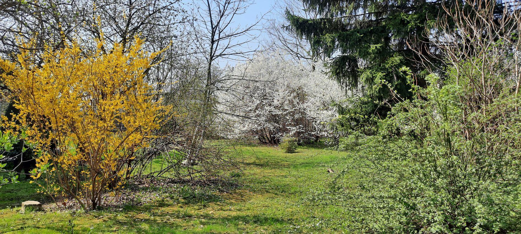 Краски весны весна