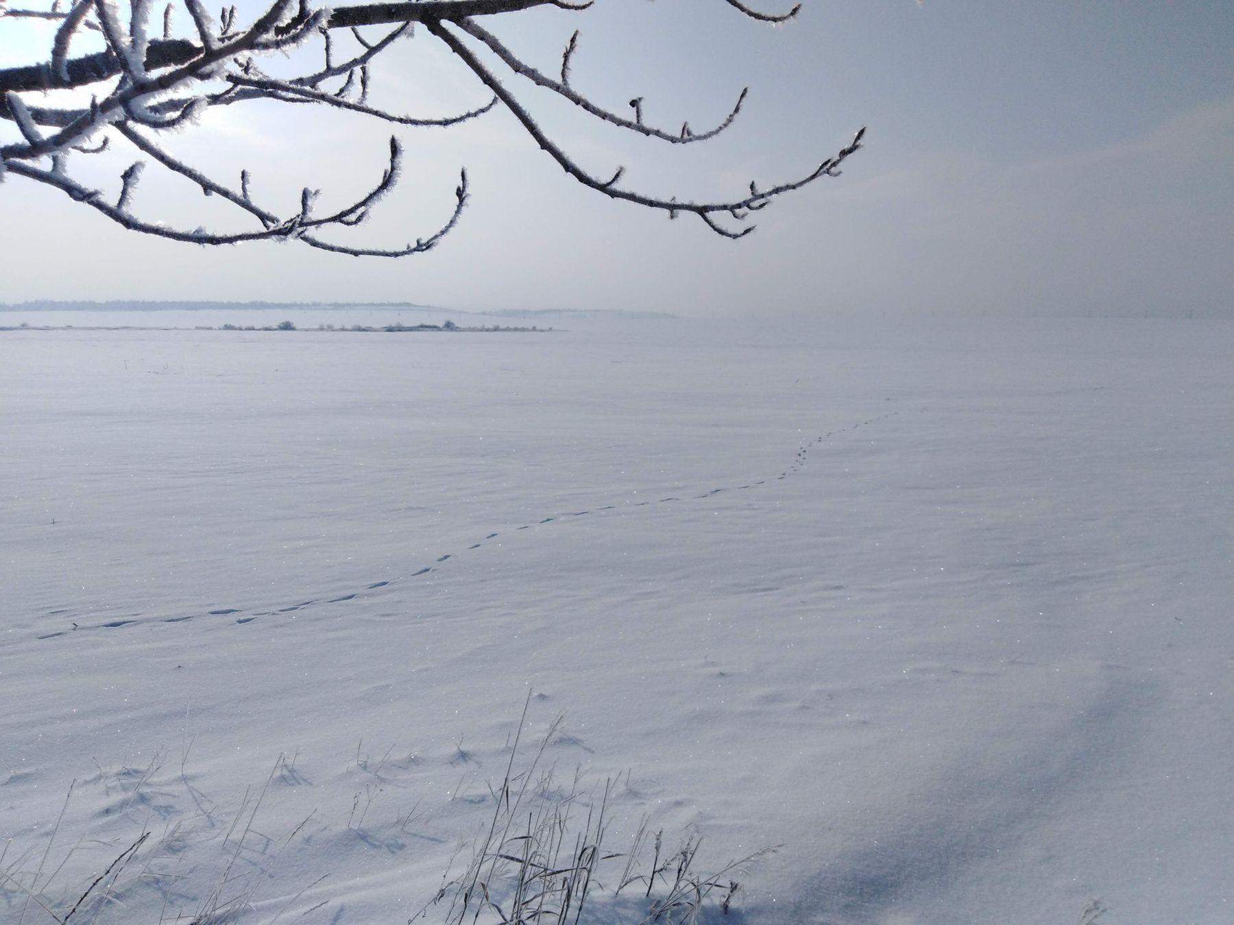 Зима, степь.