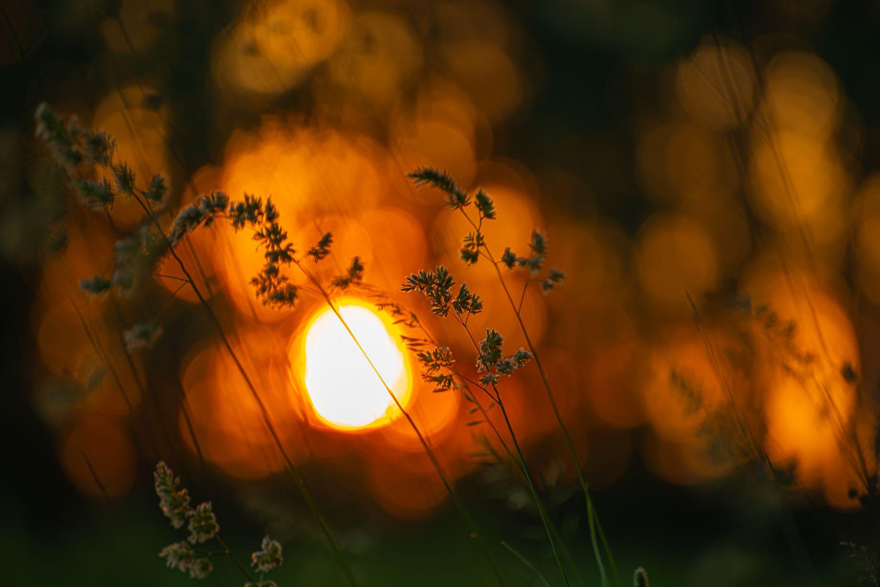 """""""Закатное солнце запуталось в листьях, а на фоне всего вышеперечисленного, видны полевые травы в контражуре"""". задняя подсветка теплый тон сверкающий идиллический прямые солнечные лучи силуэт Сиять ЭКО яркий Цвет пейзажи цветное изображение рассвет лес дерево растение вечер Натуральные ветка листья светиться флора сцена цветочный фото клен небо Красный сезонный за"""