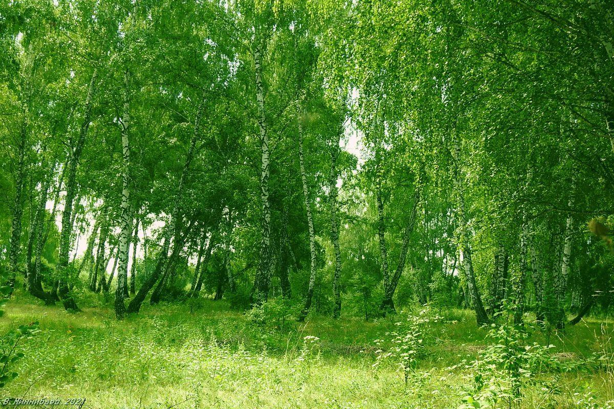 Макушка лета пейзаж природа лето лес