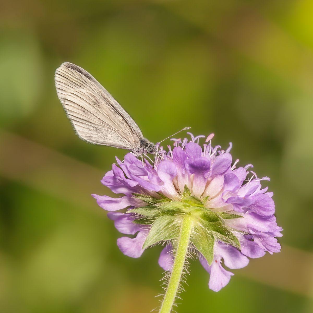 Натюрморт с цветком и бабочкой Макро бабочка фото бабочки