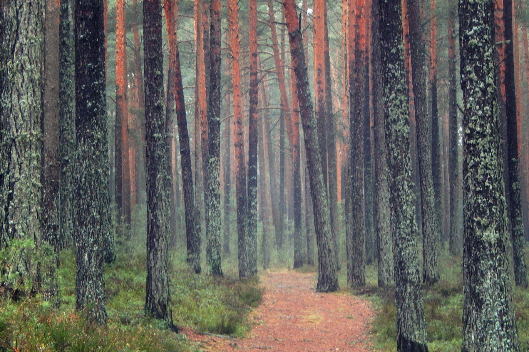 * лес деревья пейзаж природа лето день красиво eVm