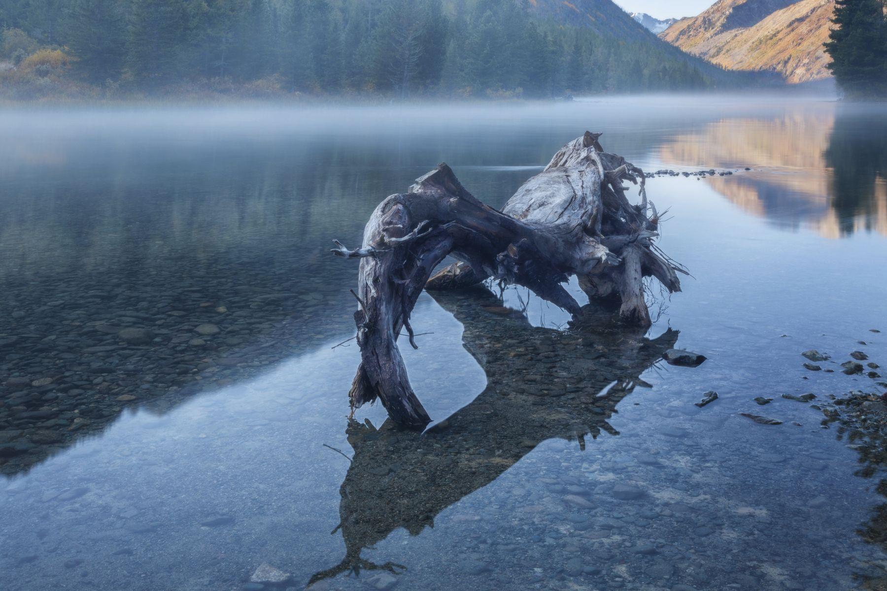 Утро туманное Алтай озеро горы лес природа закат рассвет красота приключения путешествие
