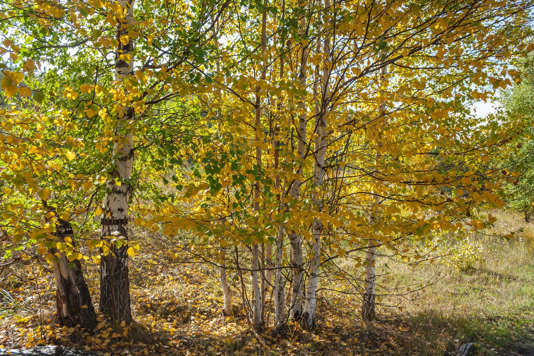 Праздничная осень. Южный Урал Миасс природа осень