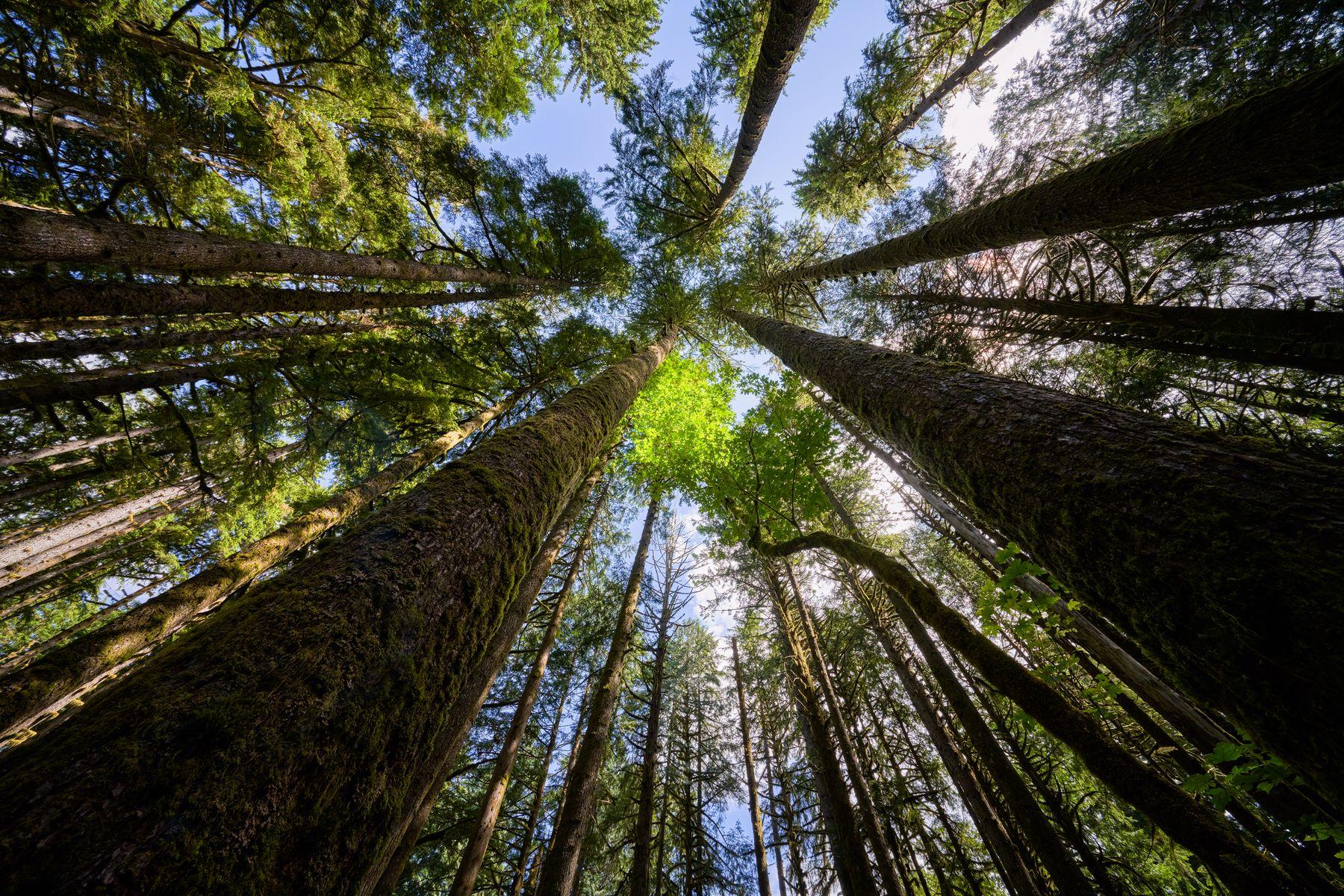 В лесу лес деревья небо