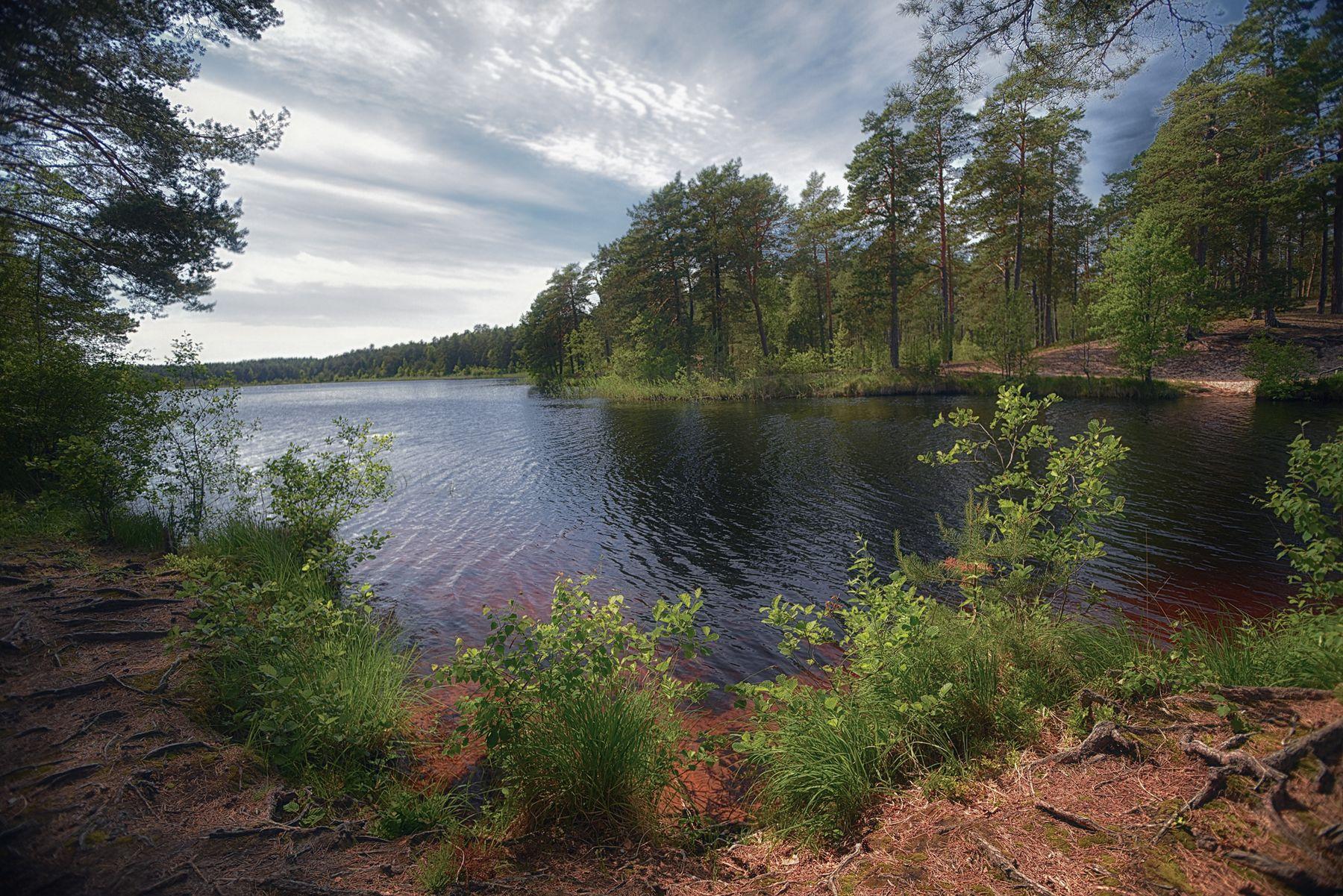 * озеро лес природа лето красота eVm