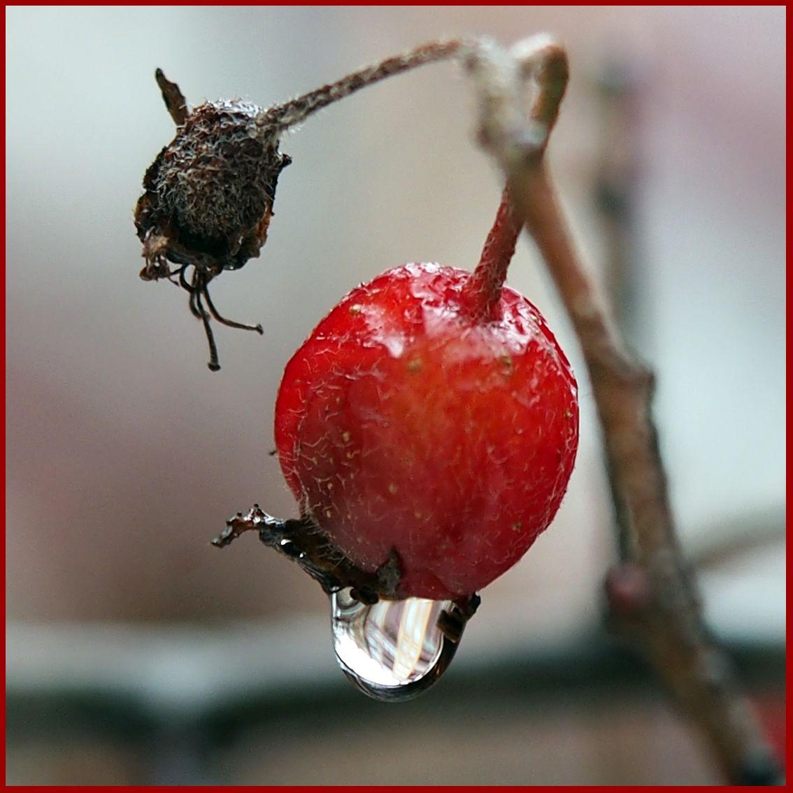 Зимние ягодки... Макро зима ягоды дождь