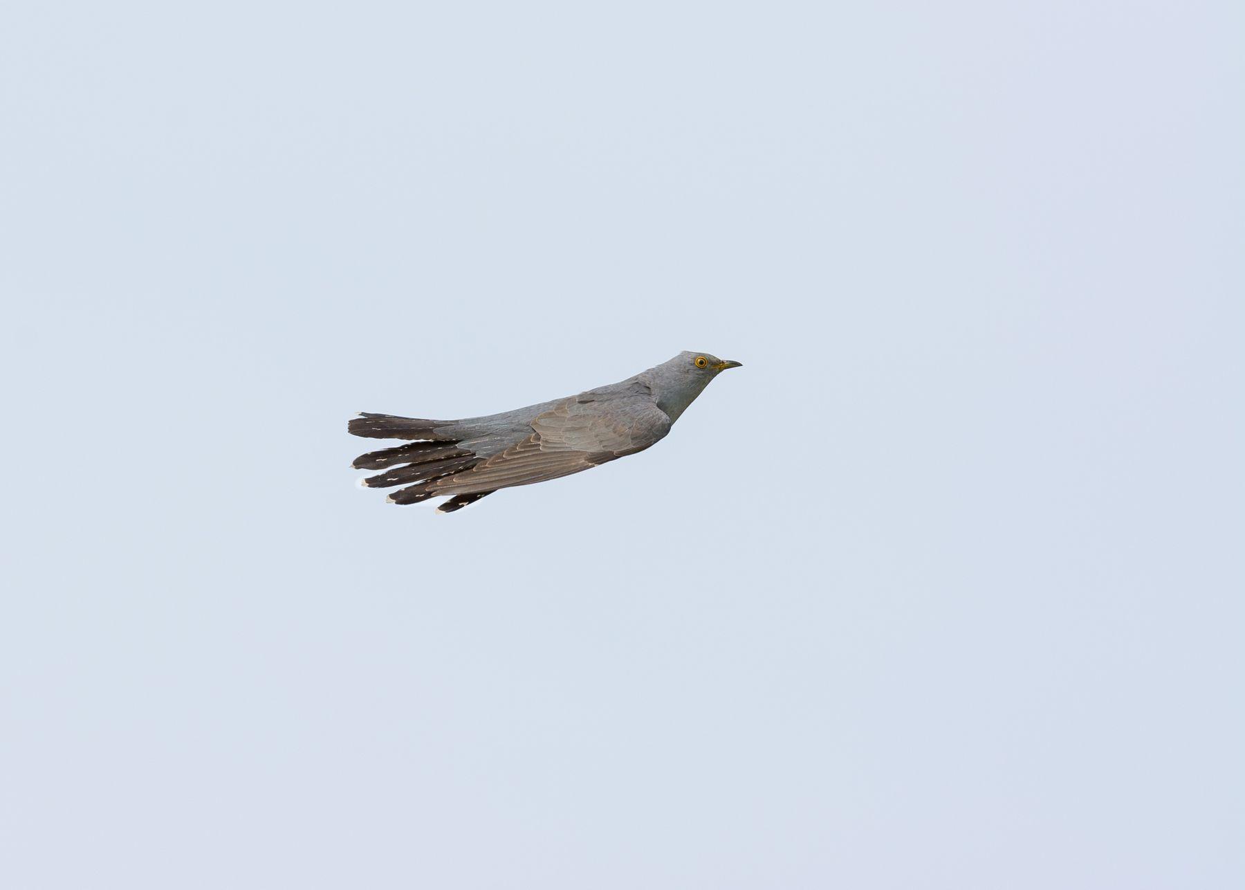 Ракета Кукушка птицы фотоохота Сибирь