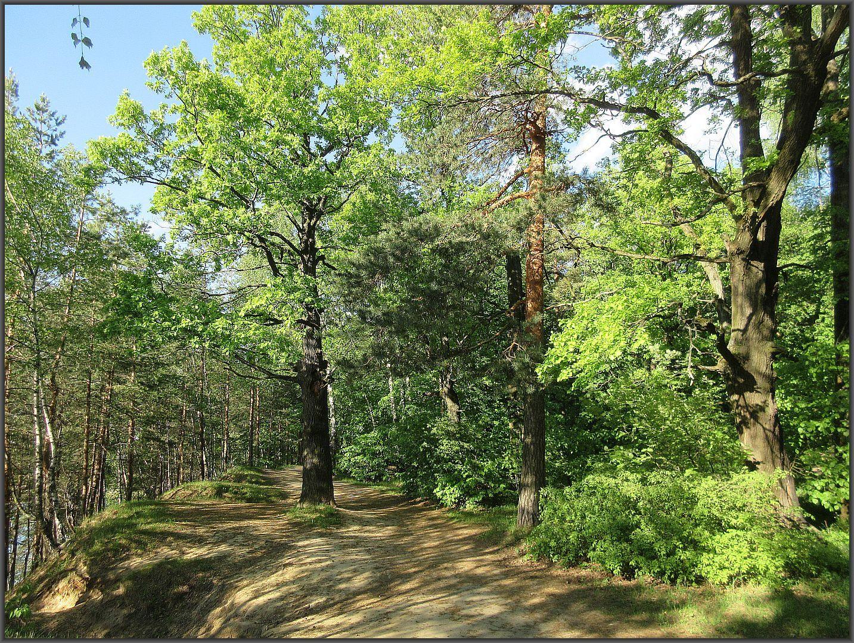 Лыткаринский лес в мае Лыткарино пейзаж