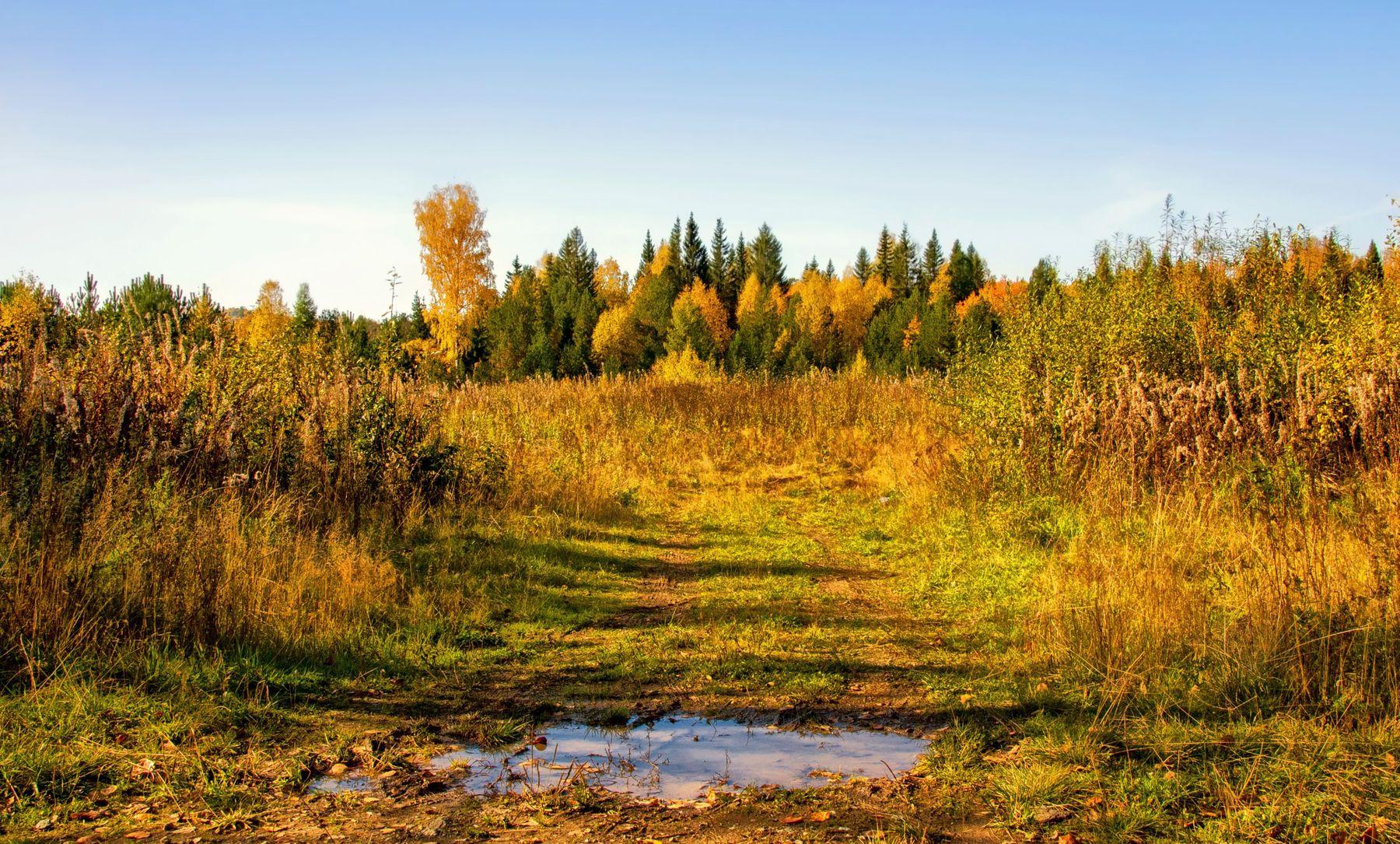 осенняя фоточка россия урал осень природа пейзаж дорога лес деревья поле вода перспектива