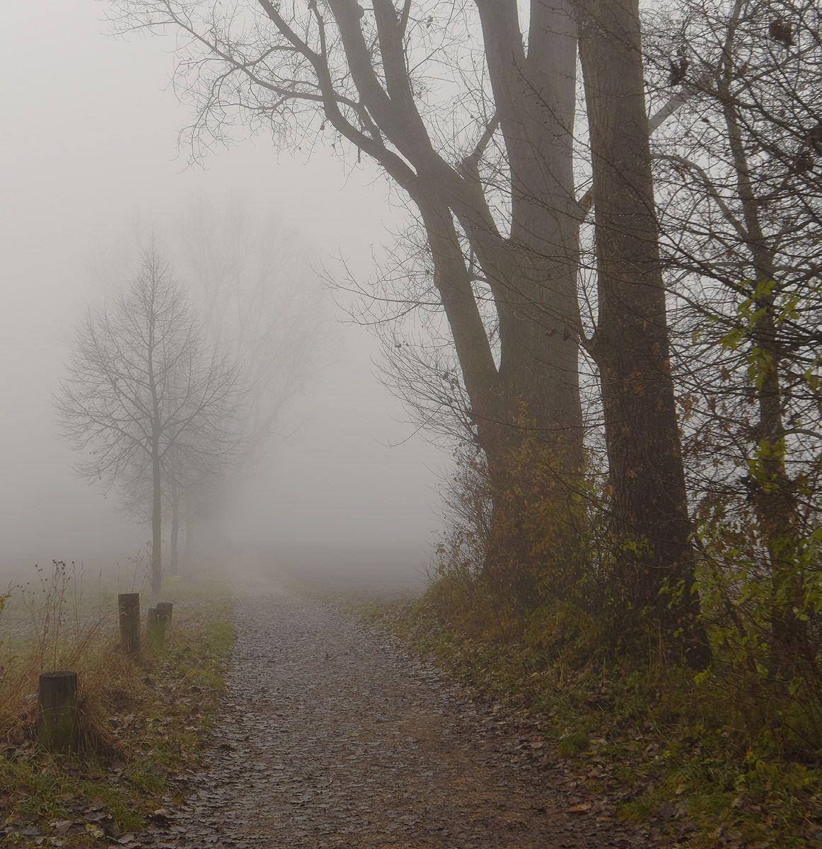 ЪЪ утро туман дорога