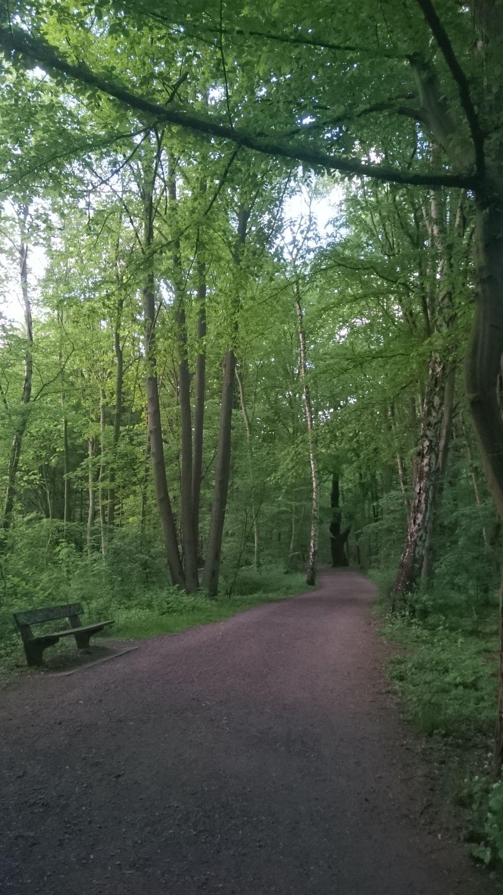 Вечером в парке