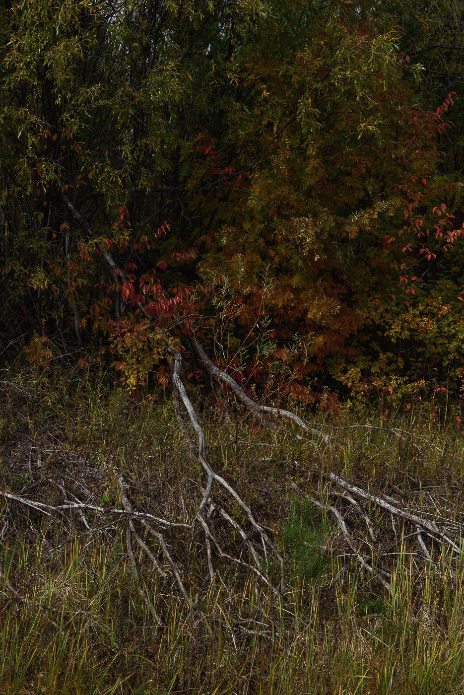 *** осень деревья разноцветные листья трава