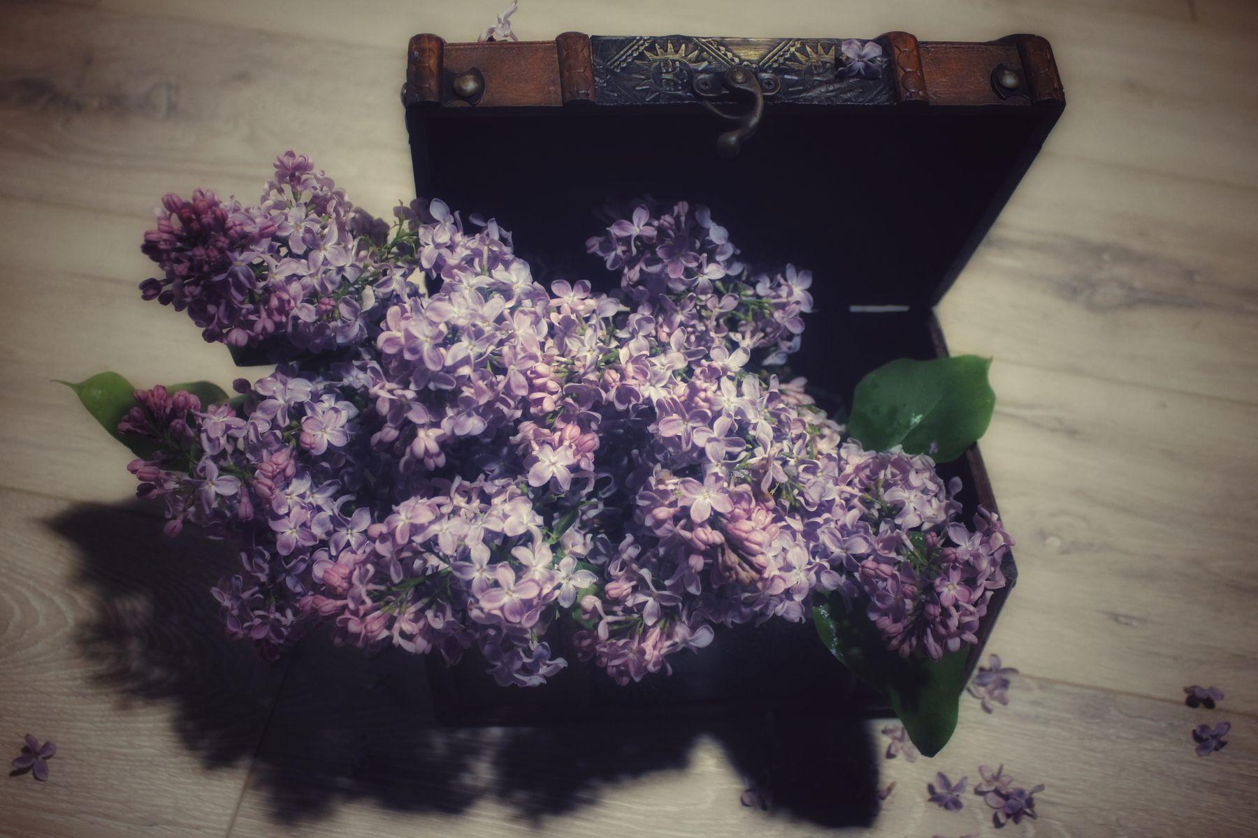 Сирень весна цветы сирень натюрморт