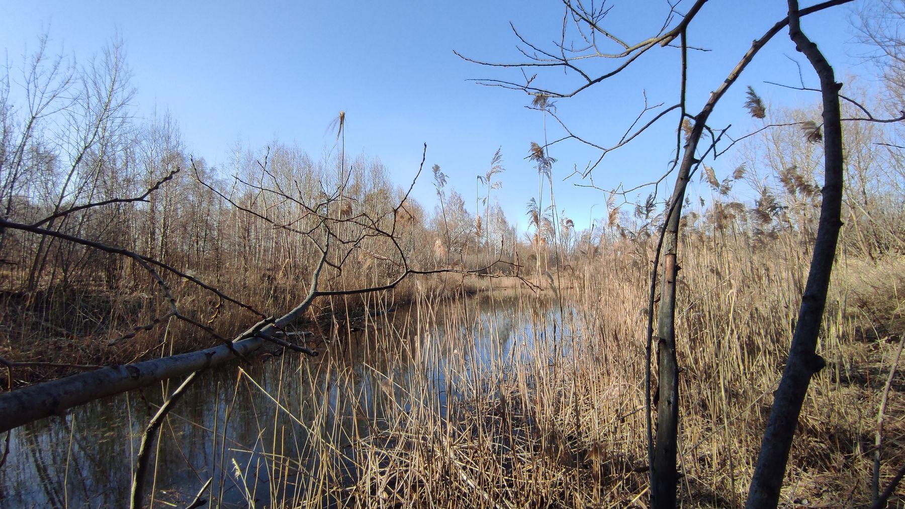 Озерко Озеро вода камыши