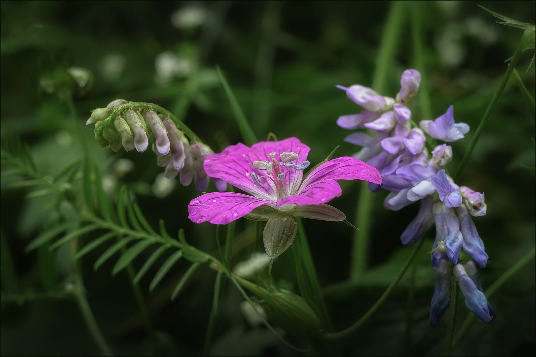 *** лето цветы макро