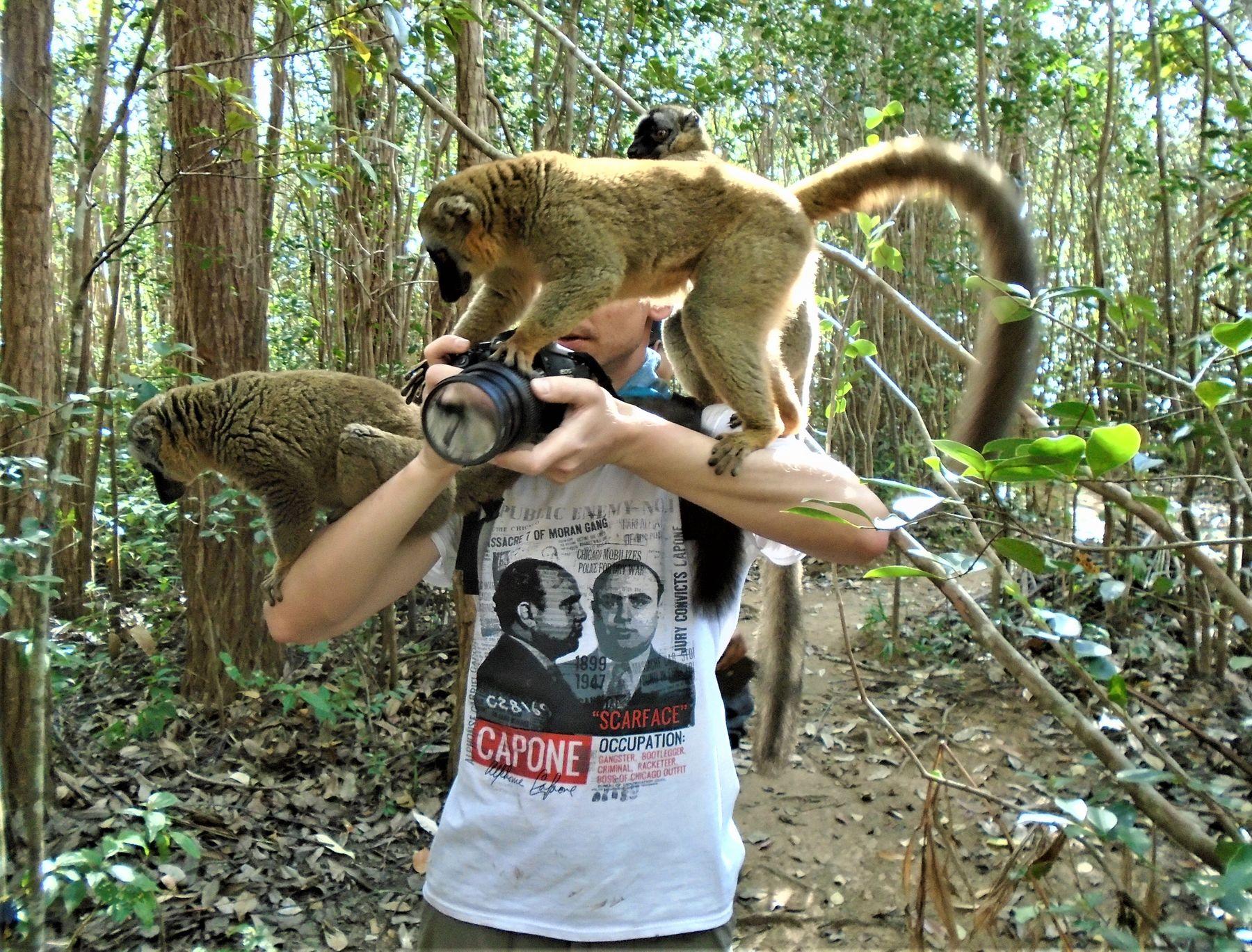 Мадагаскар. Лемуры атакуют!