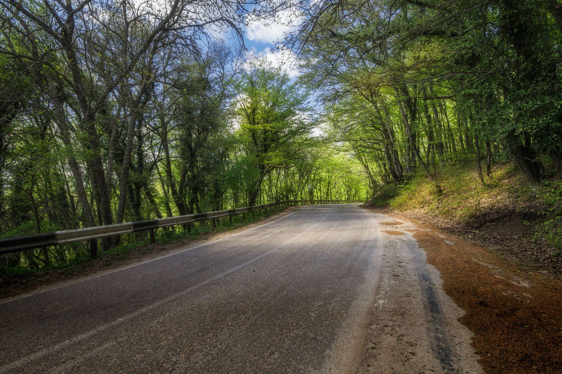По дороге в Байдарскую долину Лес дорога пейзаж