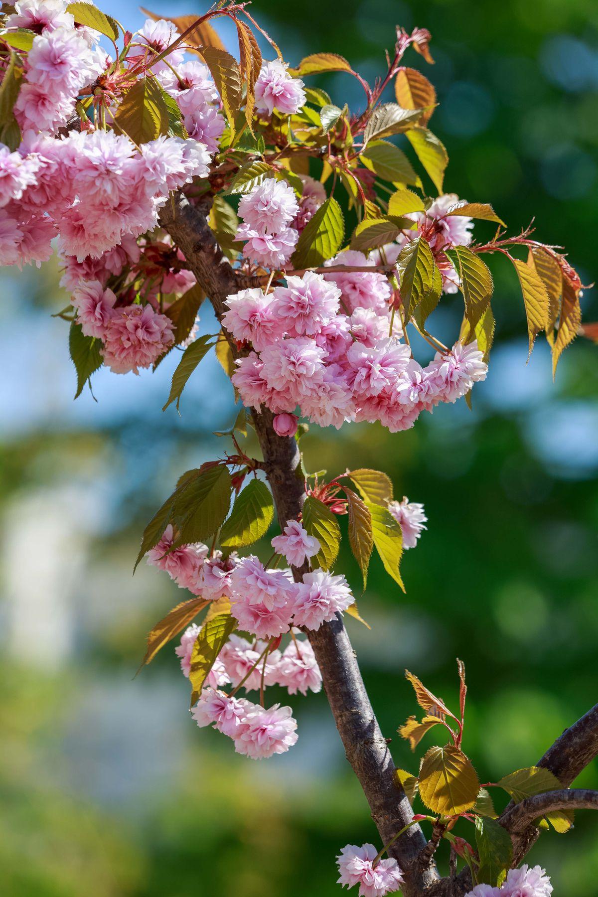 Веточка природа лето дерево веточка розовый цветок