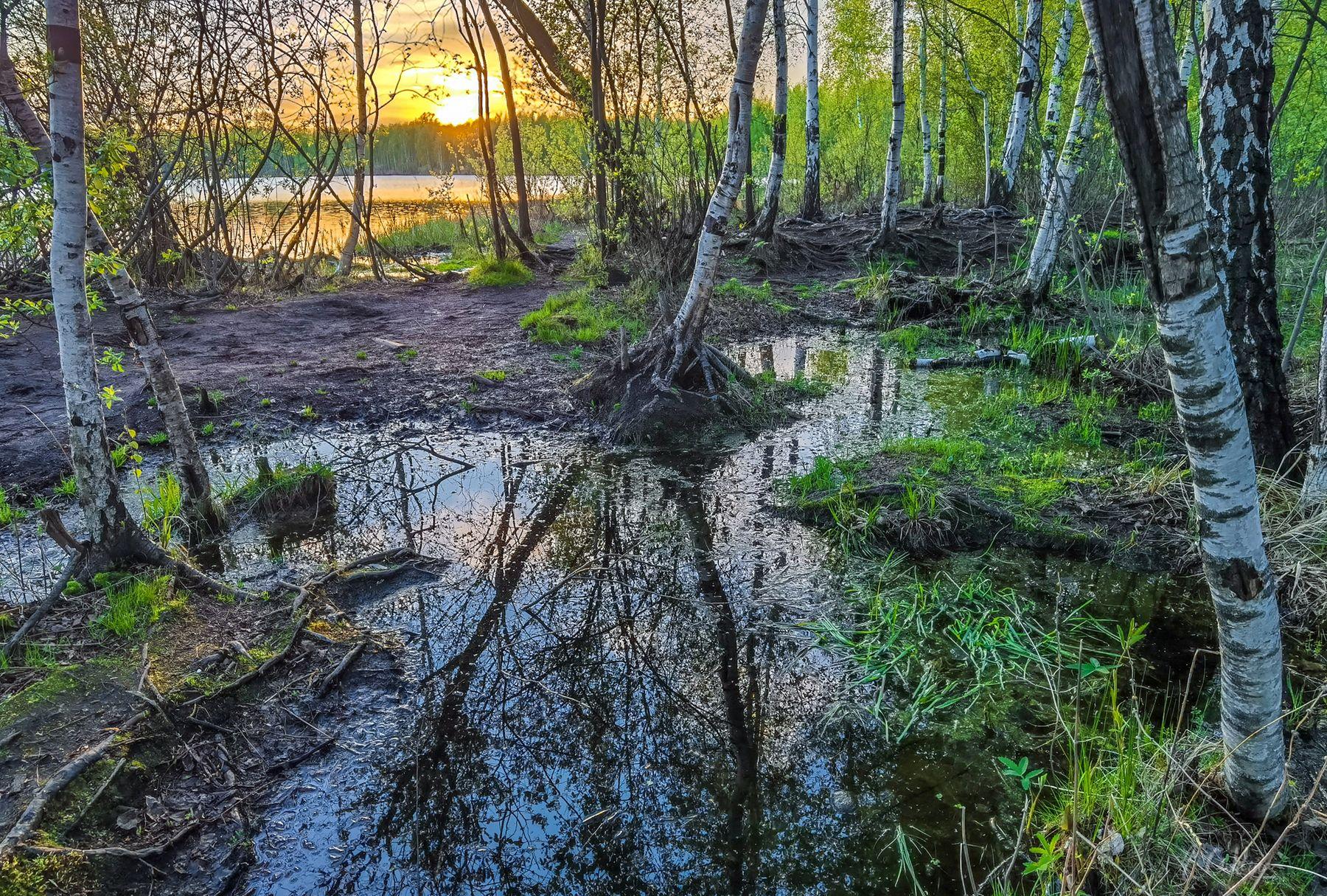 Майский заказ на озере озеро закат березы лужи весна