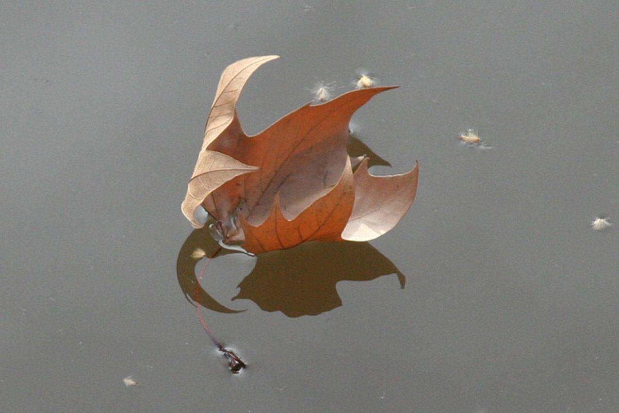 Кораблик из осени