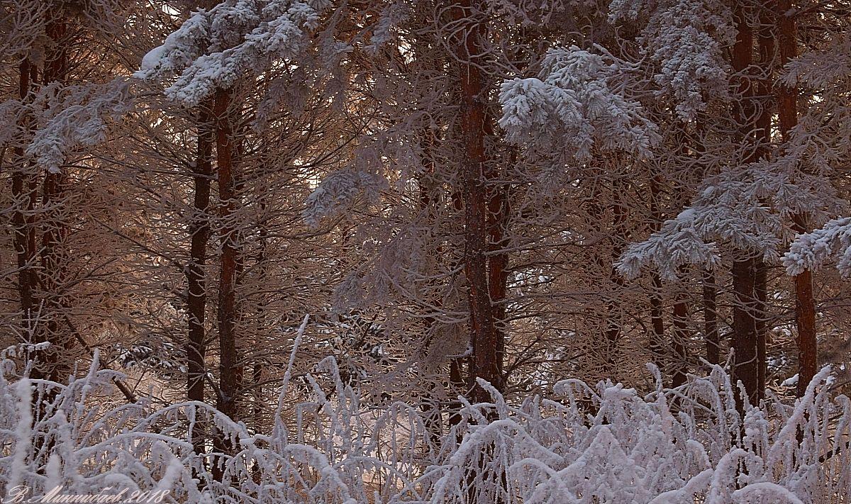 ***Сказочный лес зима лес