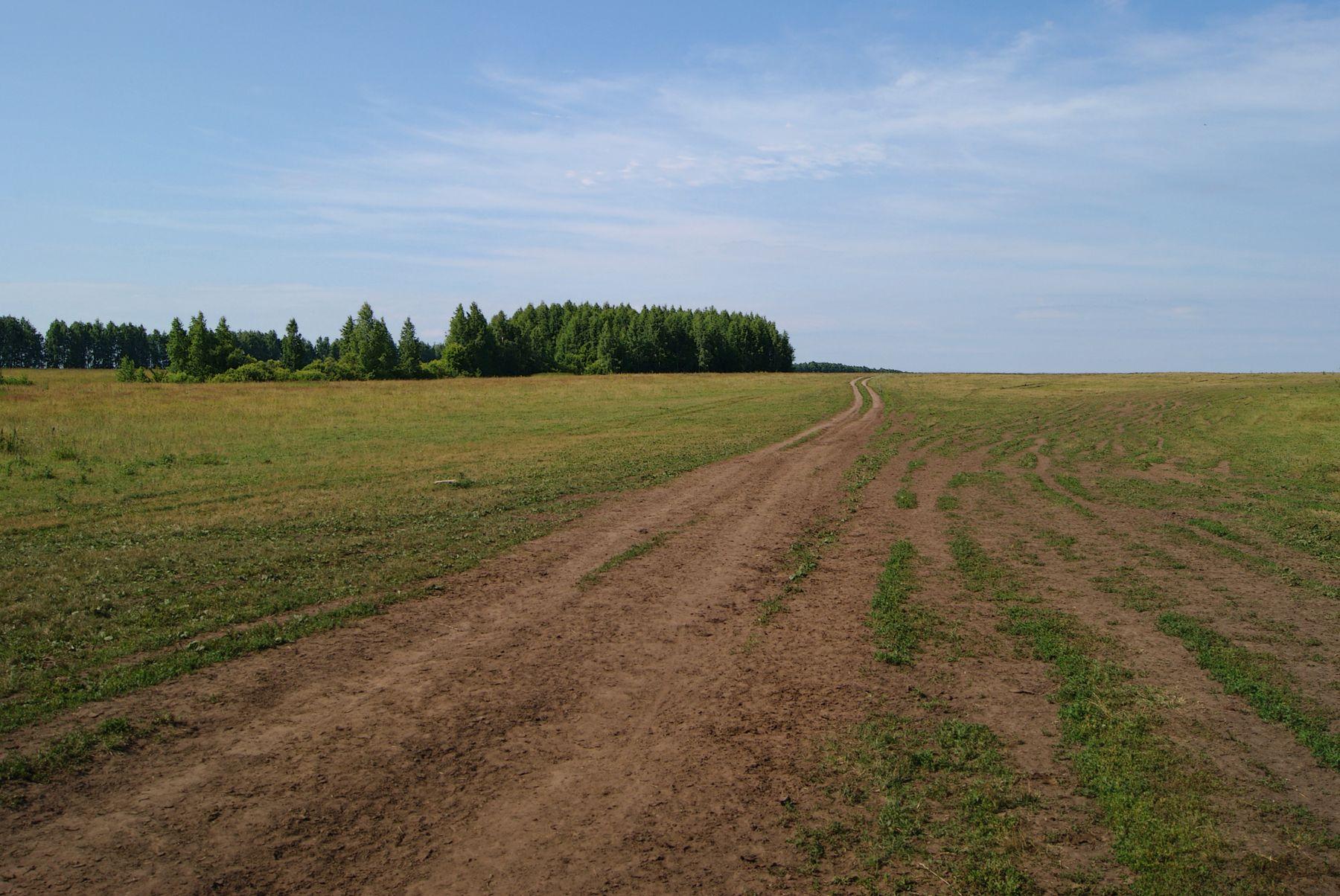 В даль уходит дорога лето лес пейзаж дорога