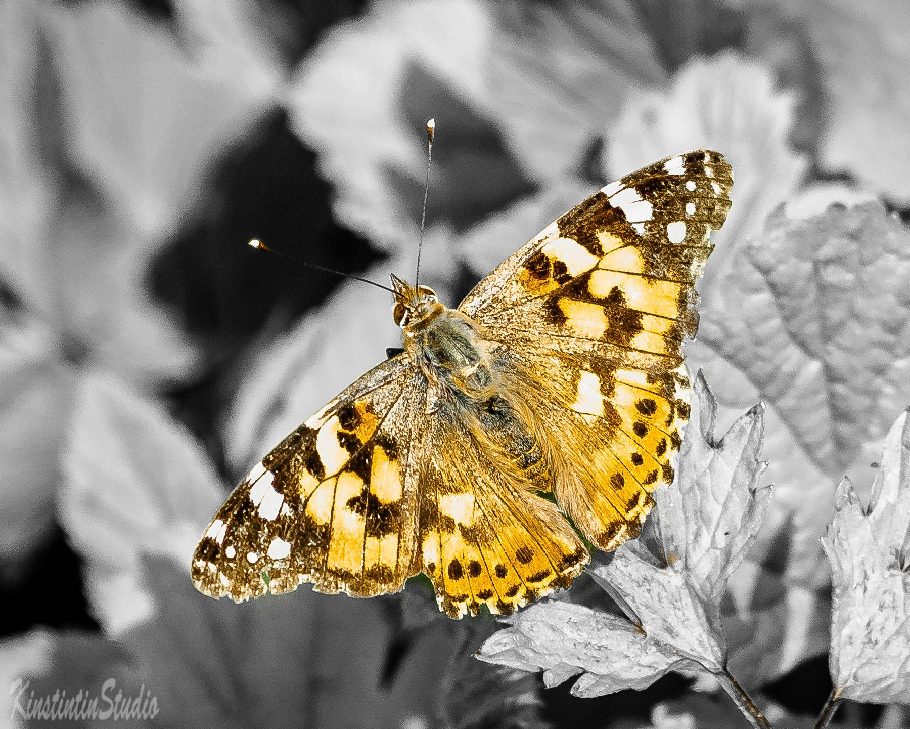 Бабочка...Весна! бабочка весна май