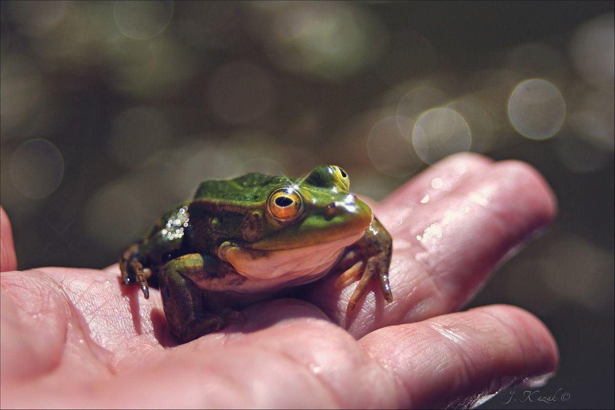 Лягушонок. природа фауна животные