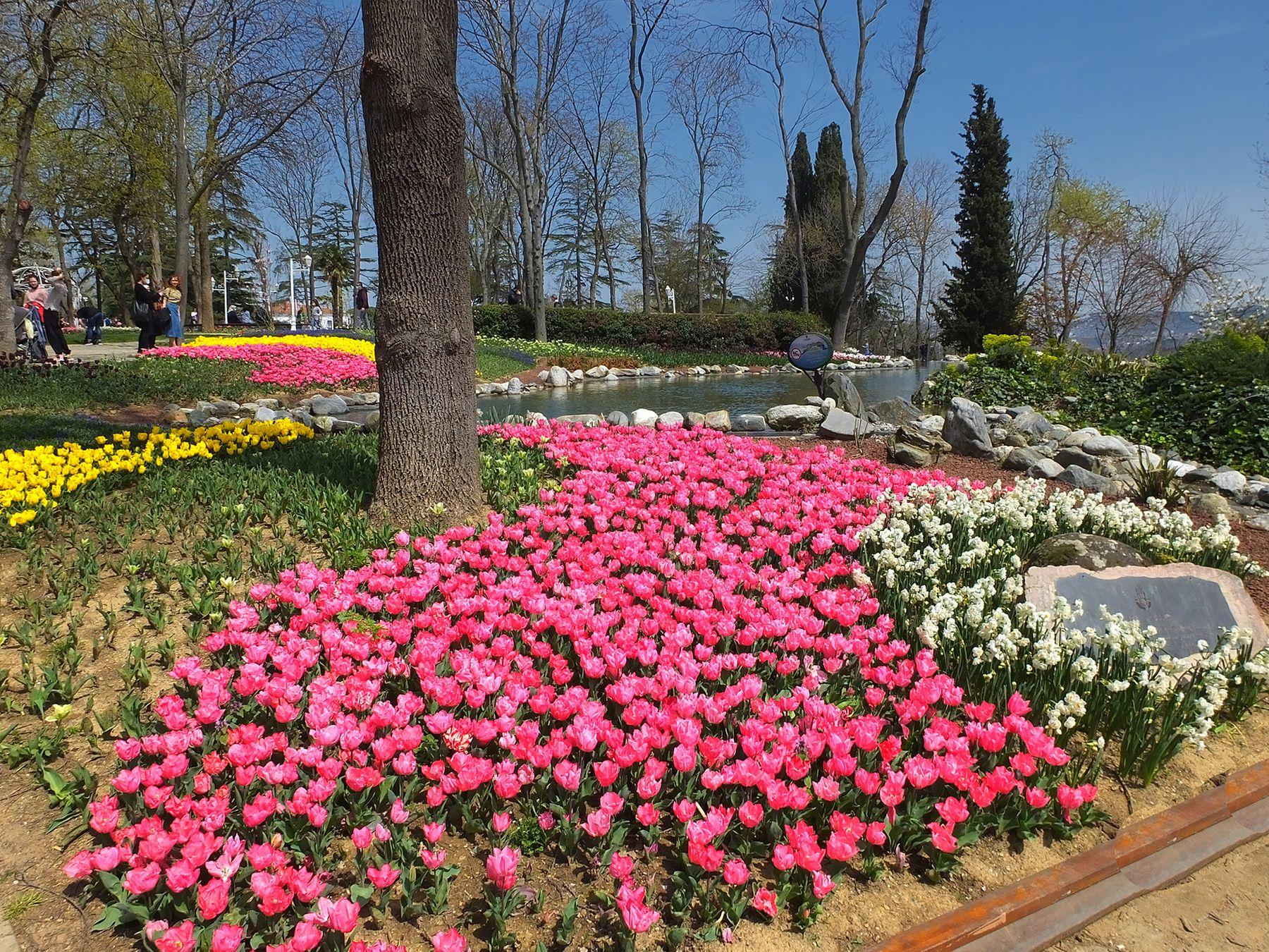 Сойти с ума от окружающего мира очень легко. Если он будет красив. Стамбул.Фестиваль тюльпанов продолжается.