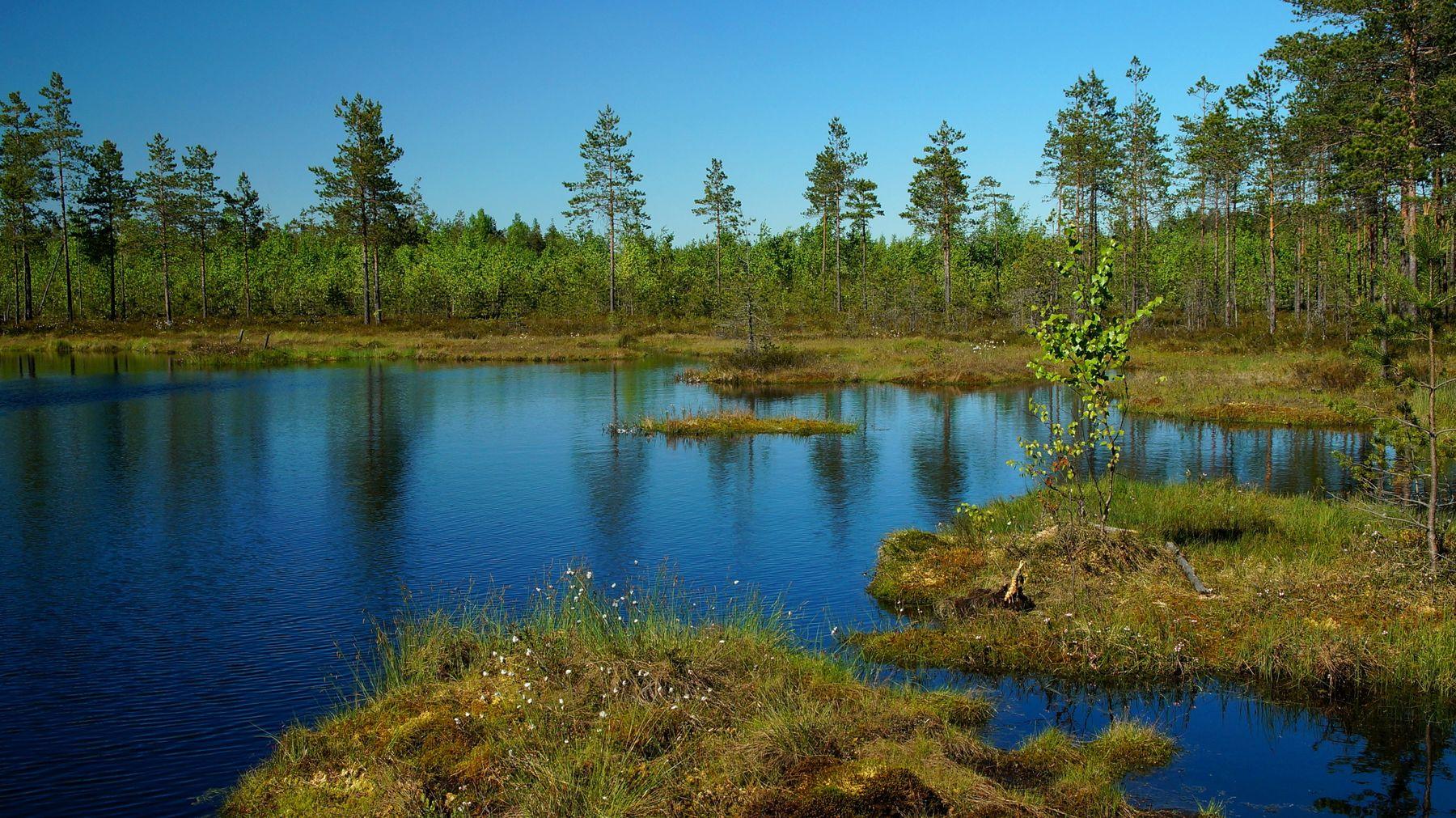 Весеннее болото Весна болото лес