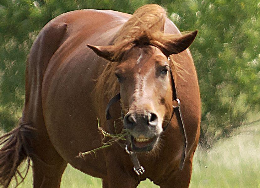 Ы животные анималистика конь лошадь