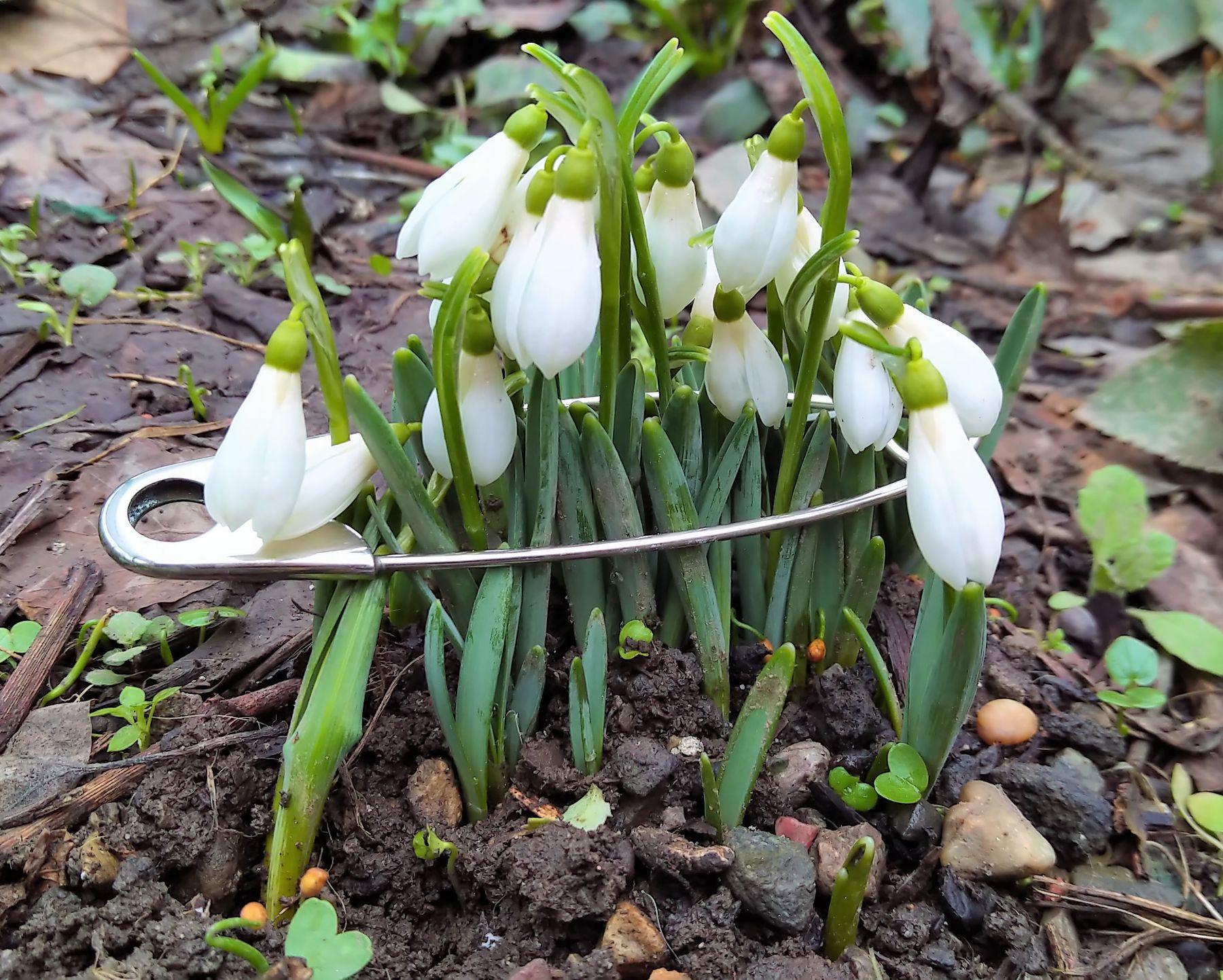 И, все-таки, весна! дневники зелень инсталляция композиция настроение подснежники фантазия фотография цветное фото