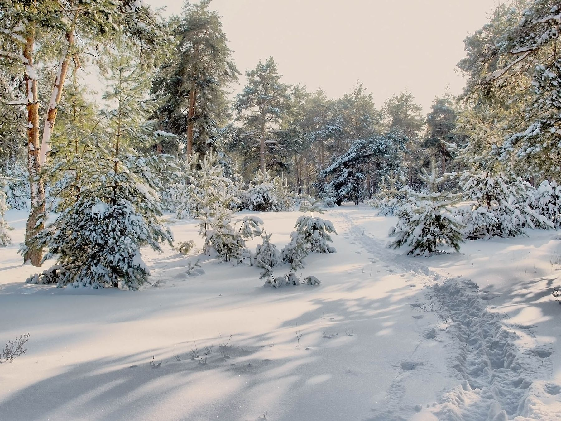 Первая лыжня...