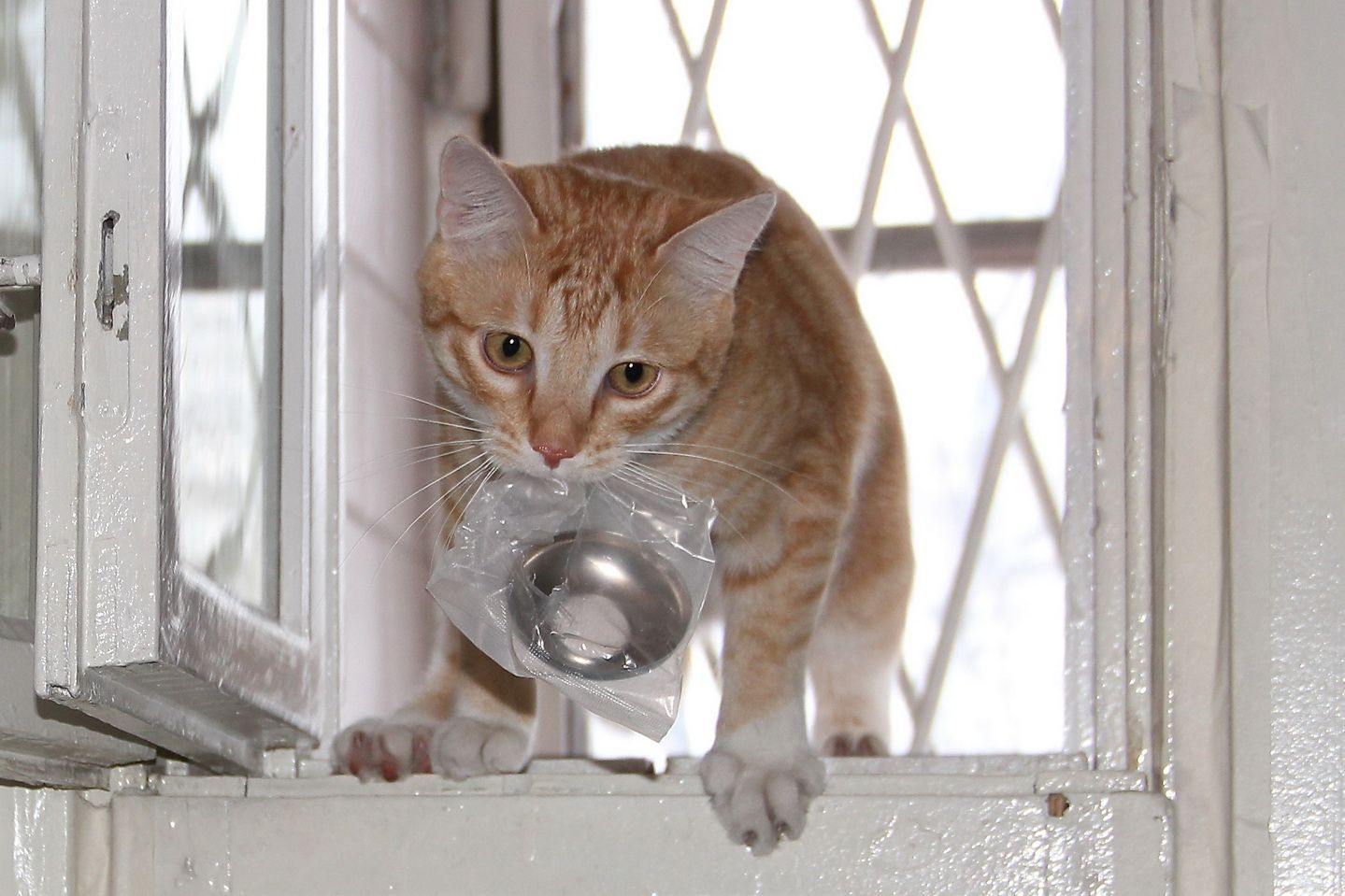 Помощник Мусик кот кошки животные помощник