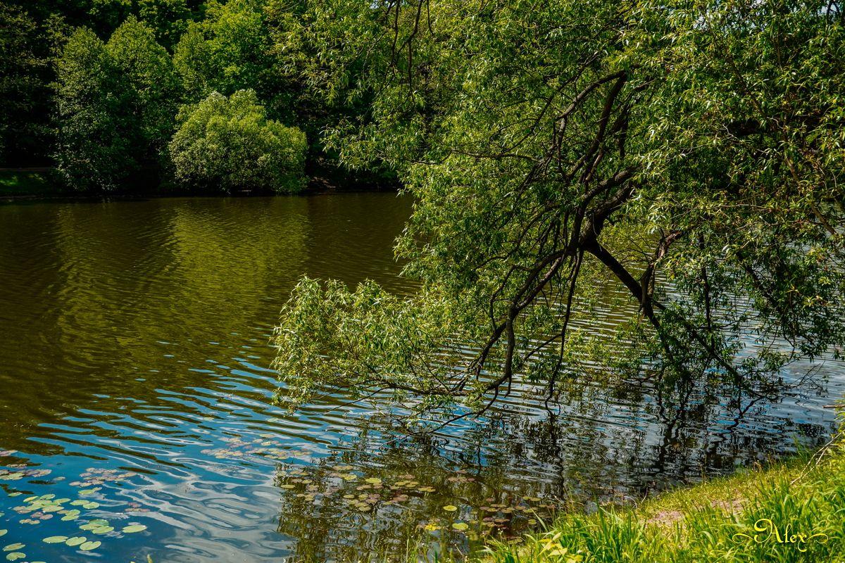 *** пруд парк вода природа лето