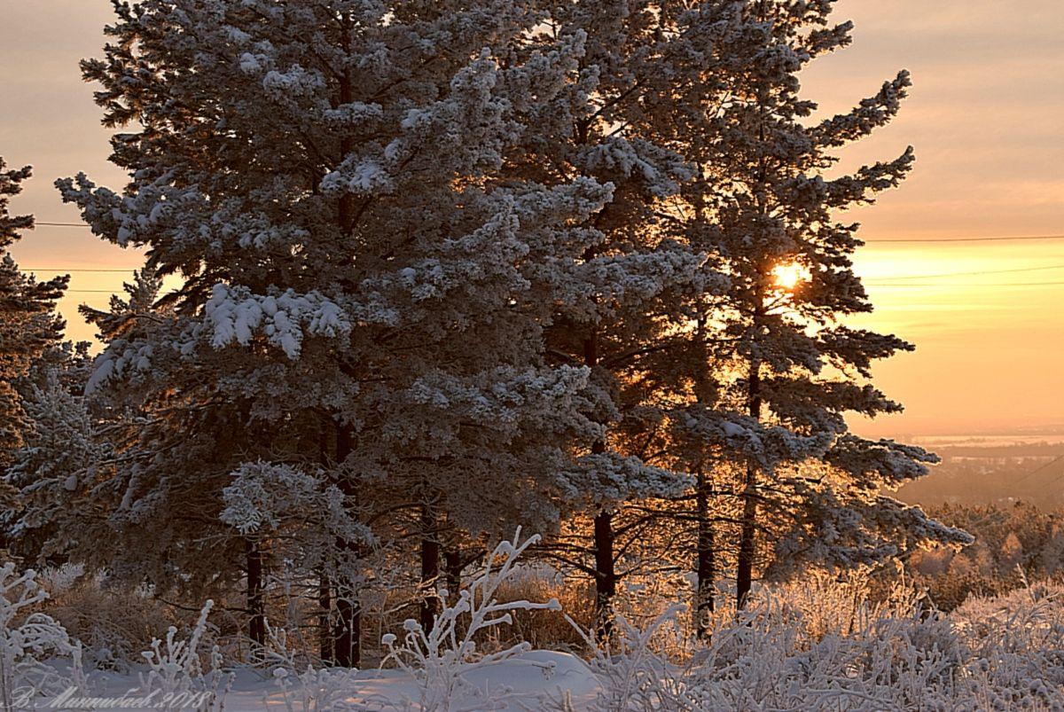 ***Зимний закат зима лес вечер