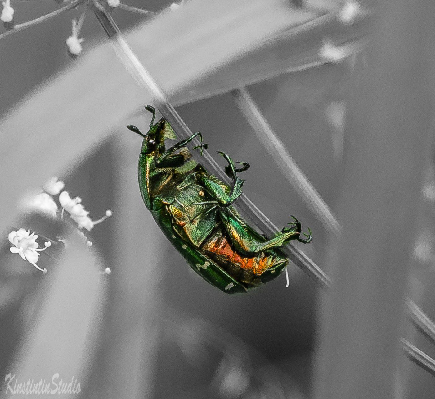 Жук... жук лето июнь