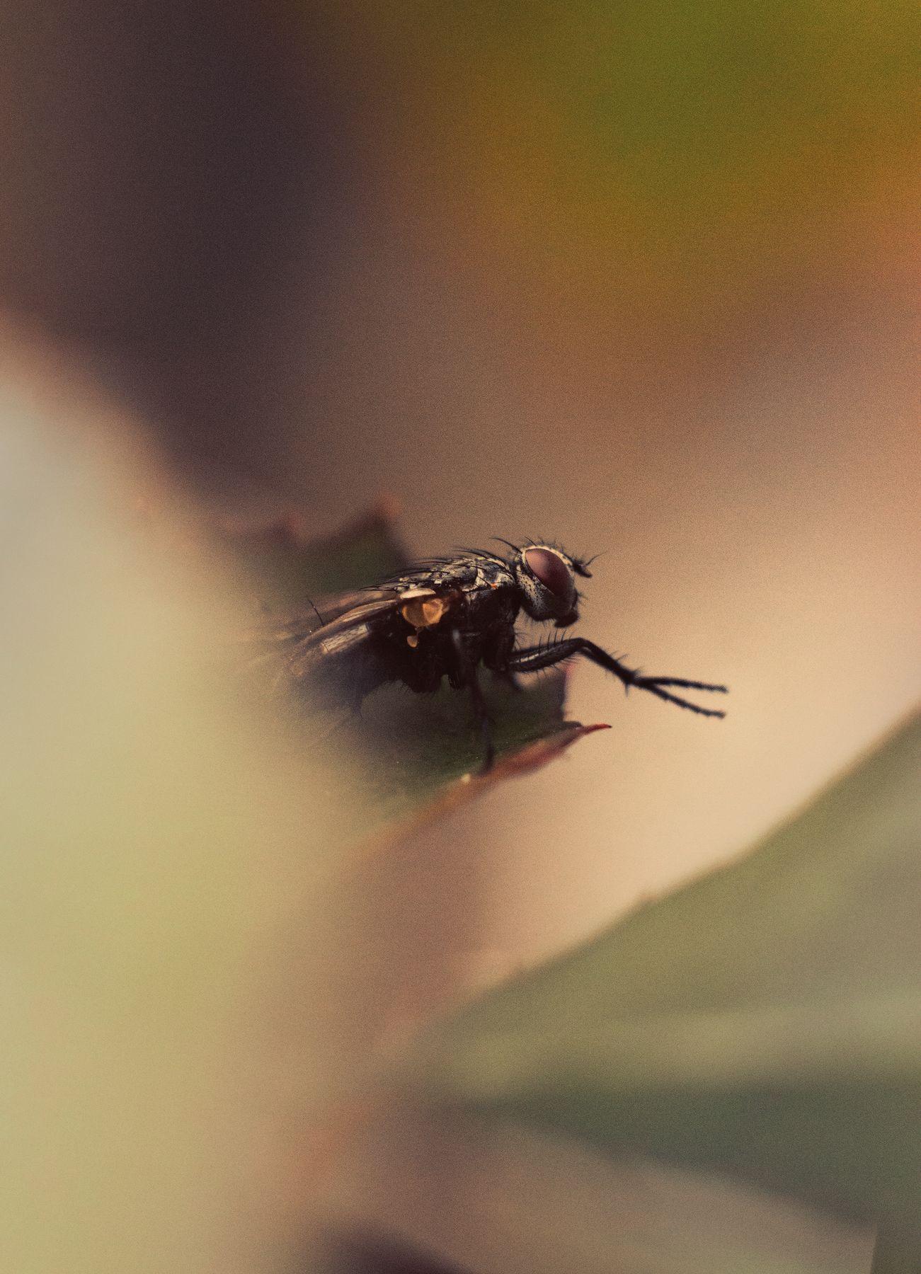 Fly fly insect outdoor brown oragne green yellow beige black sitting plant eyes legs wings муха лапки зелень растение жёлтый коричневый крылья насекомое сидит