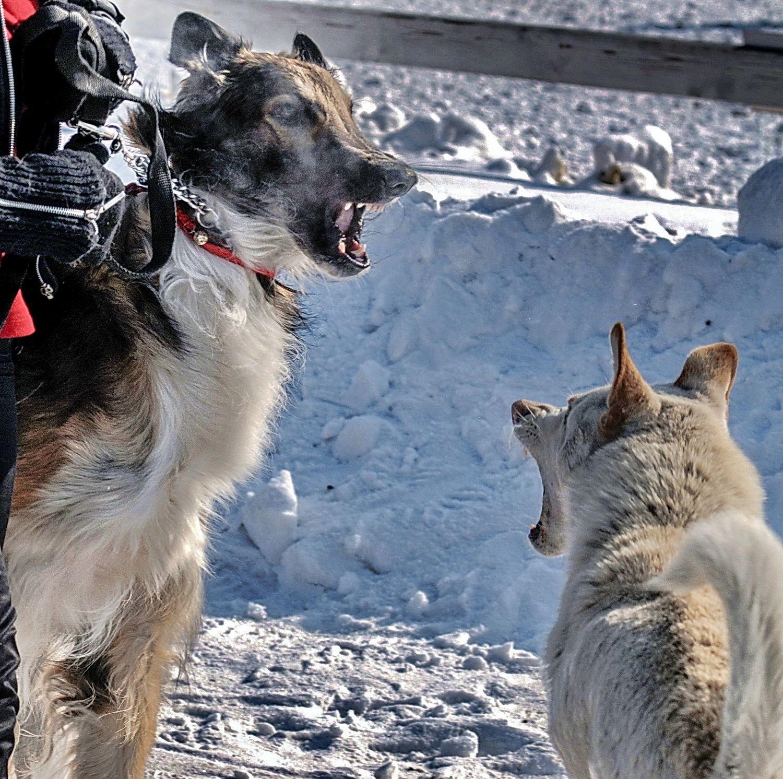 Ну, привет. Чо хотел? Фото животных собаки зима встреча Братаны
