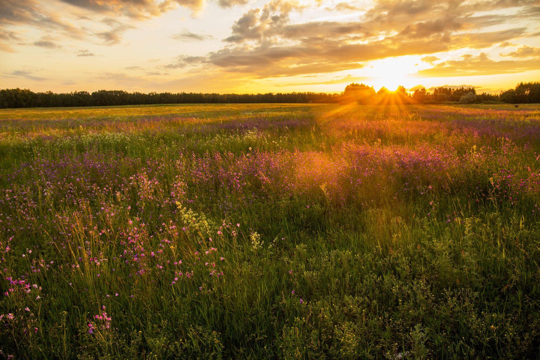 Летний закат природа пейзаж лето вечер закат новочувашский татарстан